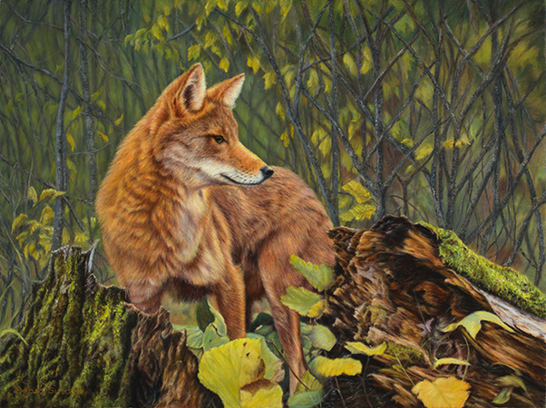 """Ever Vigilant"" - ""18 x 24"" Oil on Linen Coyote- Original Available, Prints Available"