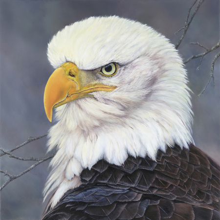 """Fearless"" - 28""x 28"" Oil on Linen Eagle"