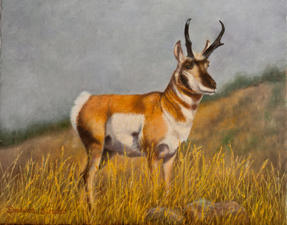 """At Attention"" - 9""x12"" Oil on Linen -Antelope"