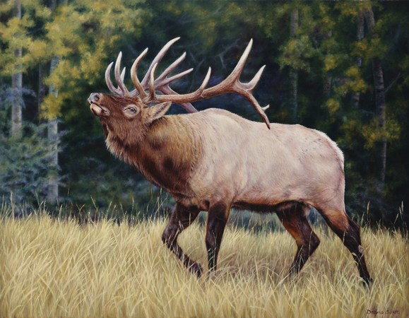 """Ready For The Challenge"" - Chosen 2018 Rocky Mountain Elk Foundation Premier Art Program ""Featured Artist"" Prints Available"