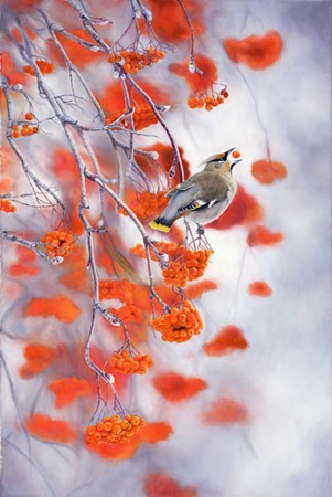 """The Good Life"" - 20""x 30"" Oil on Linen- Bohemian Waxwing Bird- Prints Available"