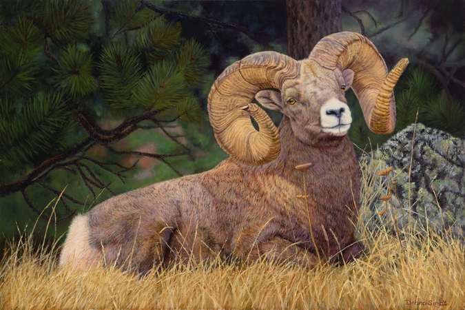 """No Rival"" - 24""x 36""Oil on Linen Big Horn Sheep- Prints Available"