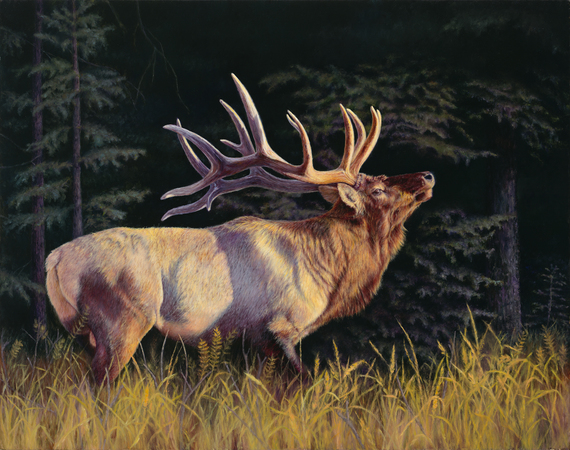 """The Patriarch"" - 28""x 40"" Oil on Linen Elk- Prints Available"