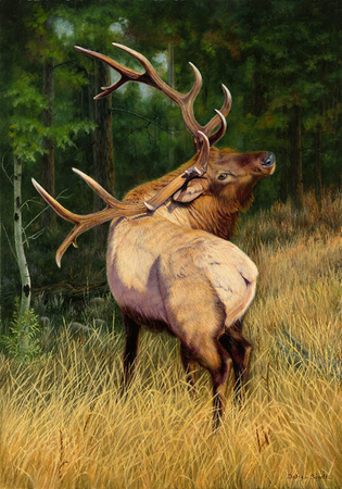 """In The Presence of Royalty"" Winner of the 2016 Rocky Mountain Elk Foundation Premier Art Program Honorable Mention - 28""x 40"" Oil on Linen- Prints Available"