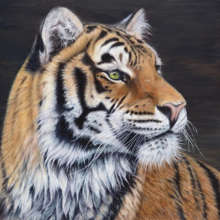 """The Tigress"" - 18""x 18"" Oil on Linen- Original Available, Prints Available"