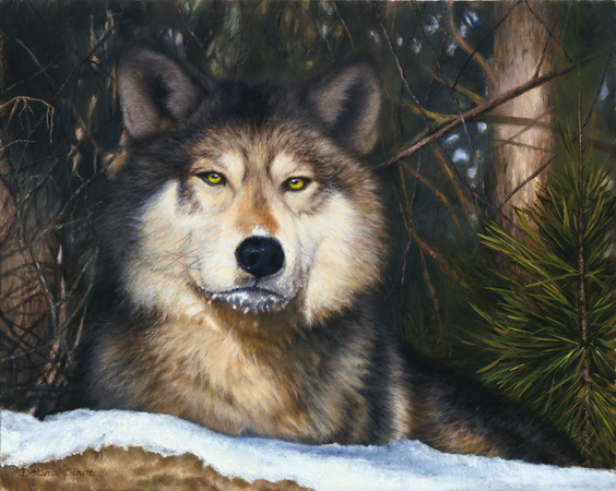 """Frozen"" - 16""x 20"" Oil on Linen Wolf Prints Available"
